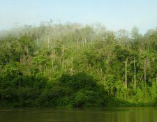 Los recursos serán utilizados para cuidar los bosques. (Foto Prensa Libre: Hemeroteca PL)