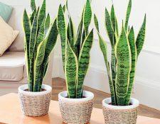Las plantas para el interior deben escogerse de acuerdo a la iluminación y riego que necesitarán. (Foto Prensa Libre: Hemeroteca PL)