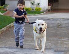 Los perros de asistencia reciben el adiestramiento necesario para ayudar a que las personas en condición de discapacidad sean más independientes. (Fotos Prensa Libre, cortesía de Fundación Waybi)