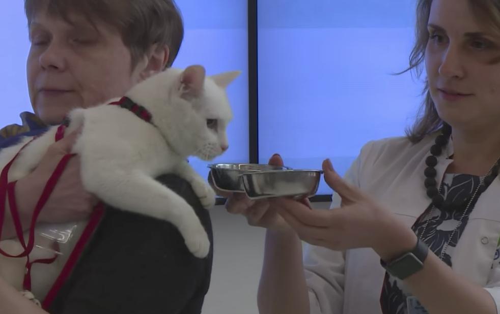 Achille es el gato de San Petersburgo que busca acertar el nombre de las selecciones ganadores en la Confederaciones. (Foto Prensa Libre: AFP)