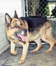 El perro Baloo hizo historia al ser acusado de la muerte de monseñor Gerardi. Foto de 1998. (Foto: Hemeroteca PL)