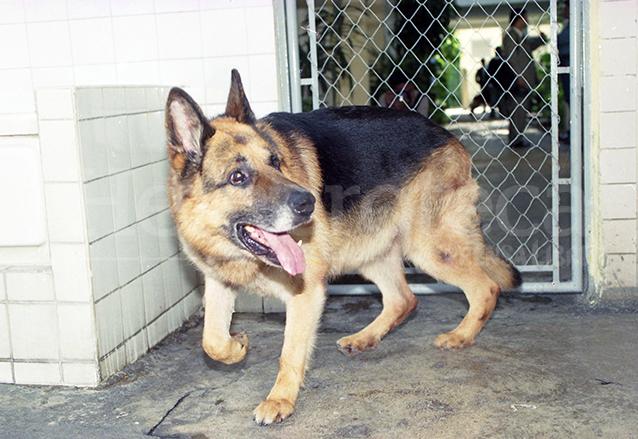 1998: polémica por el perro <em>Baloo</em>