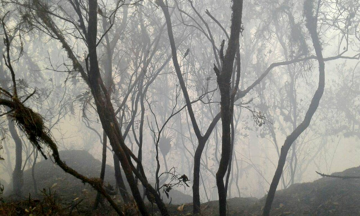 Militar muere cuando ayudaba en tareas para controlar incendio forestal