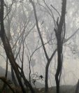 Una de las áreas donde se registra en incendio en La Libertad, Huehuetenango. (Foto Prensa Libre: Mike Castillo).