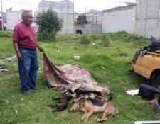 Vecinos se sorprendieron por el hallazgo de perros muertos en la colonia Vista Bella, zona 11 de Xela. (Foto Prensa Libre: Fred Rivera)