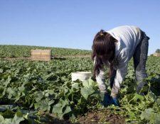 El sector del agro lanzó herramientas para apoyar a las empresas en su labor de respeto a los derechos humanos y fortalecer sus esfuerzos en la materia. (Foto, Prensa Libre: Hemeroteca PL).