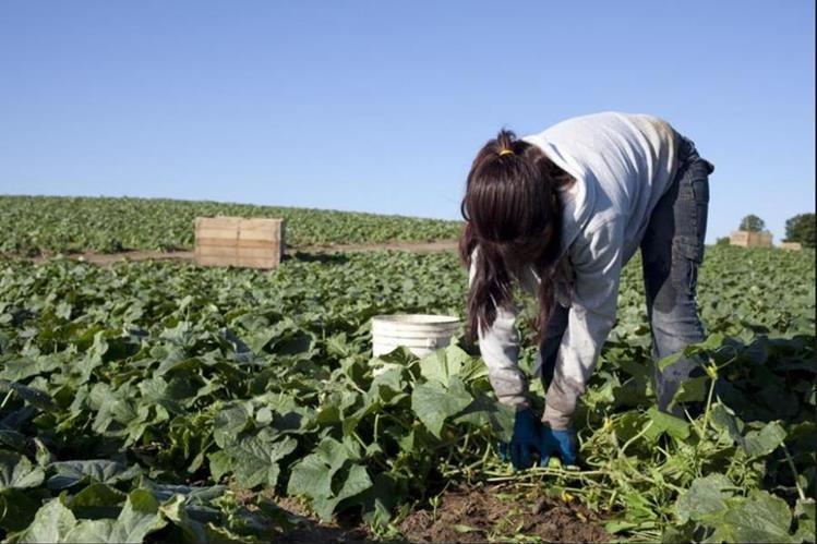 Crean política y manual de Respeto a los Derechos Humanos para el sector agrícola