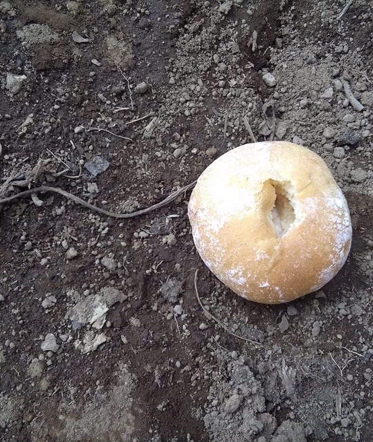 Dentro de estos panes le colocaron el veneno para matar a los perros. (Foto: Cortesía)