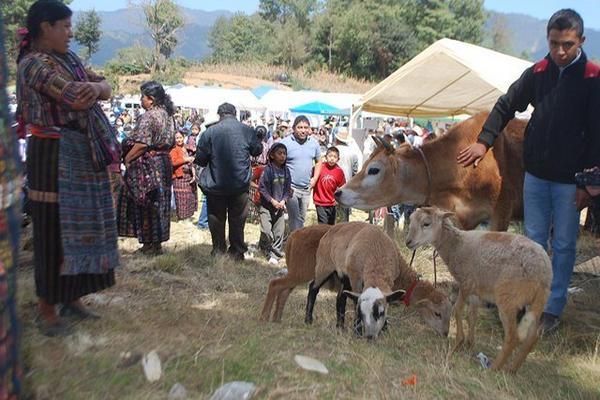 Algunos de los animales que se pusieron a la venta durante la feria agropecuaria, en Sololá. (Foto Prensa Libre: Édgar Sáenz)