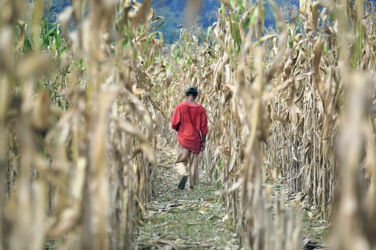 Aumenta 25% productividad de granos básicos
