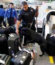 Un agente policial y un perro inspeccionan equipaje en el aeropuerto de Los Ángeles, EE.UU. (Foto Prensa Libre: AP).