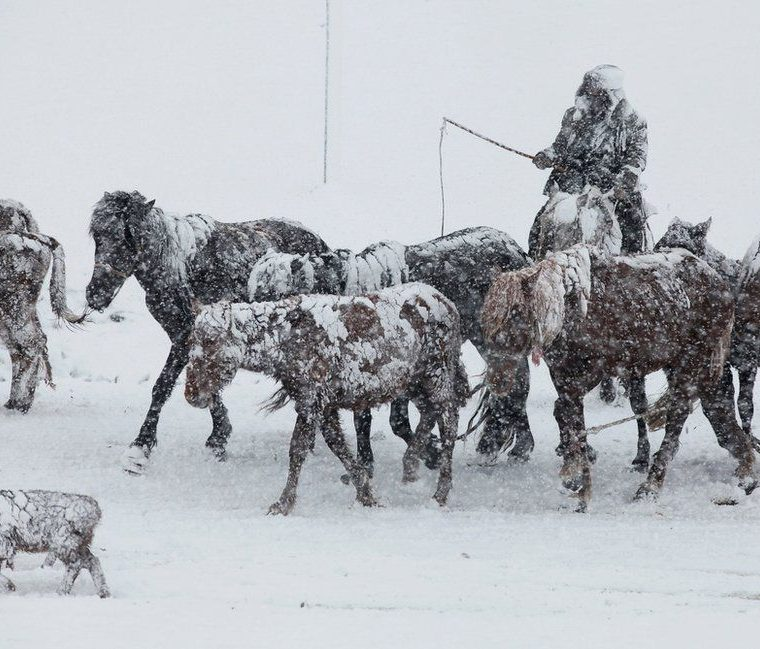 Un hombre conduce su manada de caballos bajo una tormenta de nieve en Altay, en la región autónoma de Xinjiang, en China. REUTERS