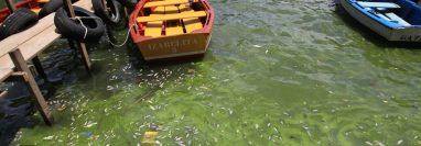 El lago de Amatitlán. (Foto Prensa Libre: Hemeroteca PL)