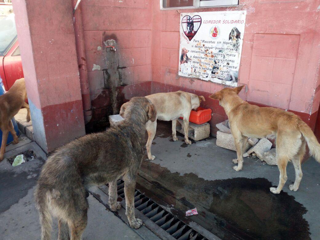 En la estación de Bomberos Voluntarios de Villa Canales, se ha instalado un comedor para perros. (Foto Prensa Libre: Jhon Monsalve)