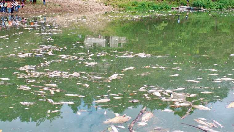 A lo largo de 105 kilómetros del río La Pasión se han encontrado cientos de peces muertos flotando, por lo que pobladores de 16 comunidades de Sayaxché piden que se investiguen las causas.