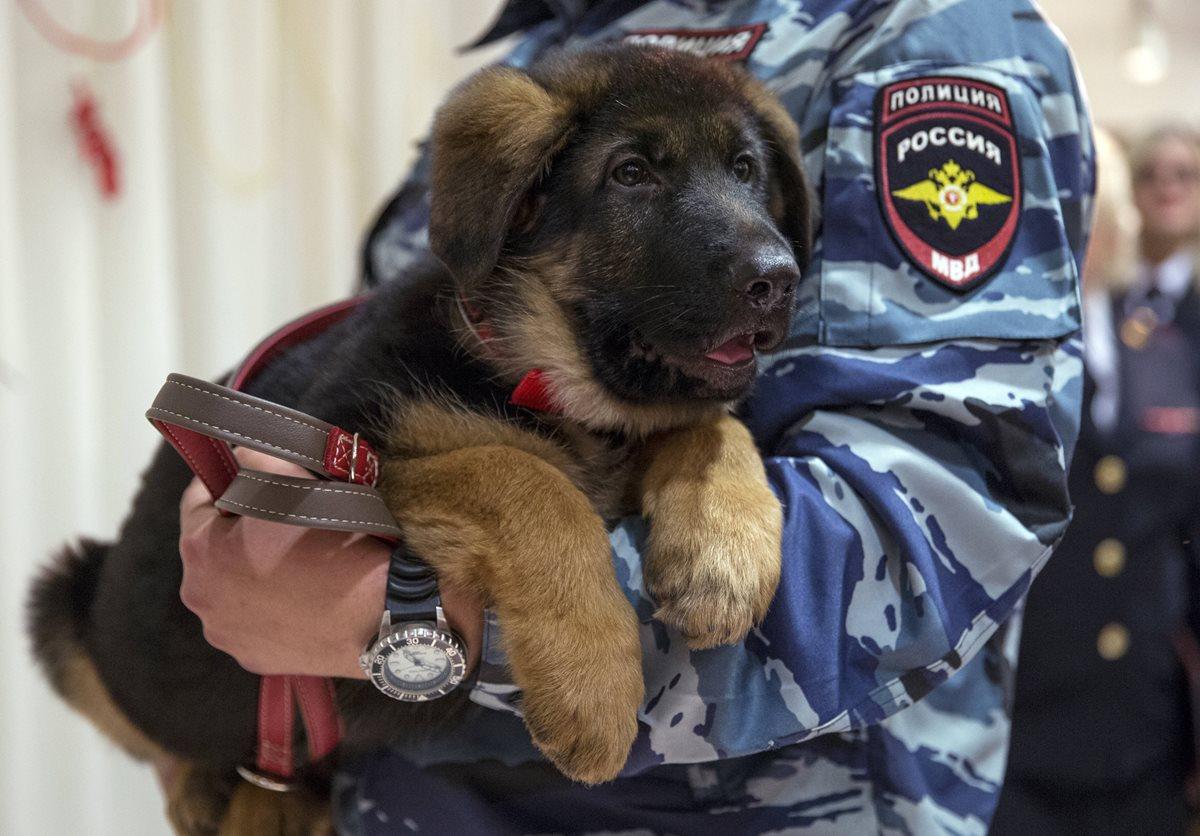 Rusia entrega un perro policía a Francia para reemplazar a<em> Diesel</em>