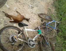 El cadáver de un venado fue hallado en San José, Petén, junto a dos bicicletas. (Foto Prensa Libre: Rigoberto Escobar)