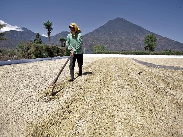 País debe definir entre vender más o mantener calidad de café