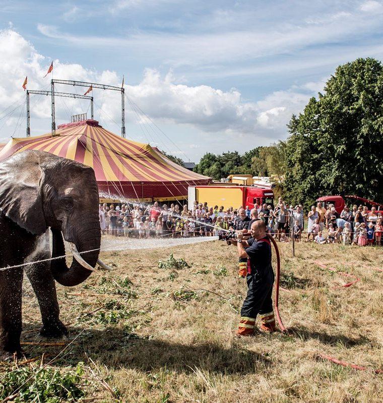 Varios bomberos rocían con agua a un elefante del circo Arene en Gillele, Dinamarca, por la ola de calor extremo originada por un potente anticiclón en el norte de África. (Foto Prensa Libre: EFE)