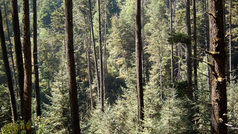 Bosque en San Pedro Sacatepéquez, San Marcos. (Foto Prensa Libre: HemerotecaPL)