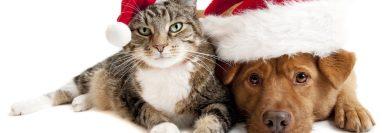 A perros y gatos les causa ansiedad y estrés los juegos pirotécnicos por lo que hay que resguardarlos de estos ruidos.