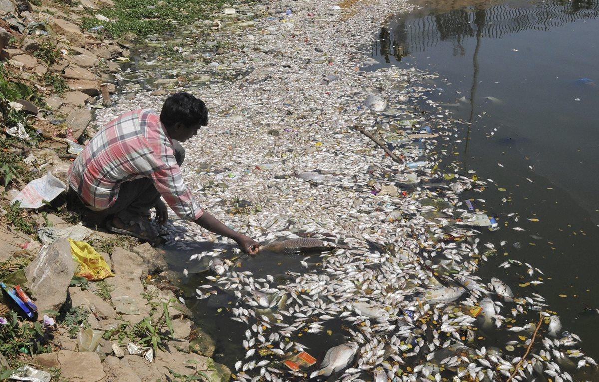 Miles de peces muertos aparecen en orilla de lago en la India