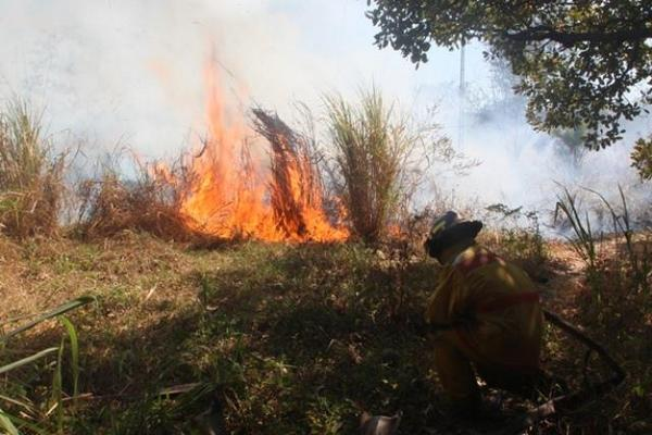 """Bombero controla incendio forestal en la zona 1 de Escuintla. (Foto Prensa Libre: Melvin Sandoval) <br _mce_bogus=""""1""""/>"""