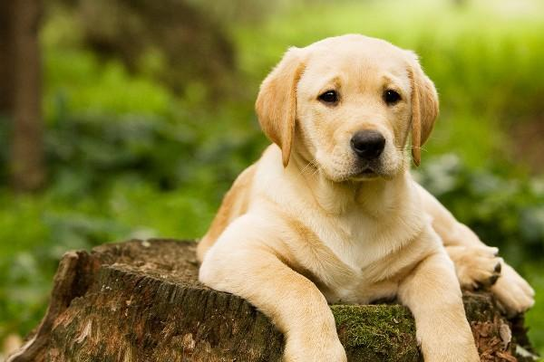 para evitar problemas cutáneos en los animales,  existen antipulgas naturales.