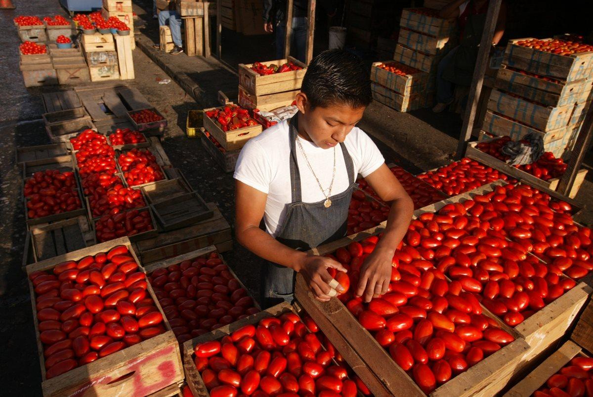 Las razones que provocaron que el precio del tomate subiera en julio