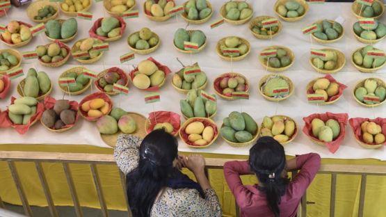 En Nueva Delhi, en India, se celebra el Festival del Mango en el que se puede probar más de 500 variedades de esta fruta. GETTY IMAGES