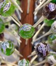 Estos dulces poseen 90 miligramos de THC, el componente químico de la marihuana que es responsable de sus efectos psicotrópicos. Están a la venta en un dispensario de marihuana médica legal en San Fernando, California. (Foto: AFP)