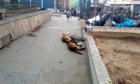 Tres de los perros que fueron hallados muertos en el parque La Unión, Santa Cruz del Quiché. (Foto Prensa Libre: Héctor Cordero)