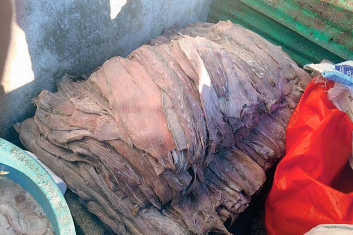Decomisan mil libras de carne de pez vela en Puerto San José