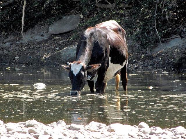 Buscan que municipalidades conserven calidad del agua