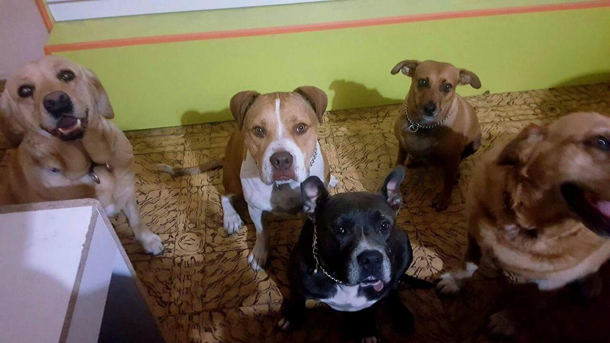 Los perros corren el riesgo de enfermarse en invierno, por eso es importante cuidarlos. (Foto Prensa Libre: Cortesía Guate Unida por las Animales)