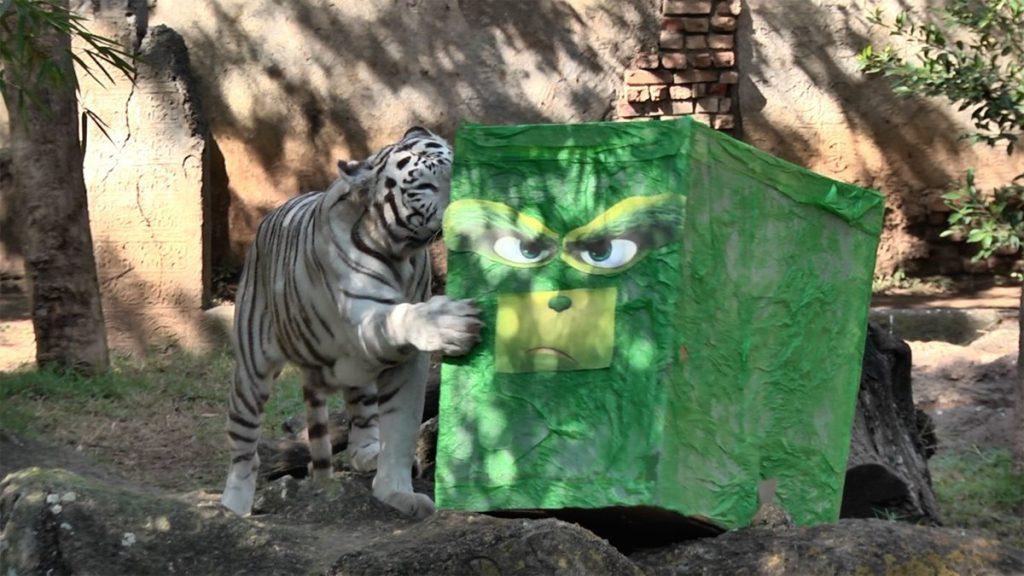 Los regalos atraen a los animales del zoológico.