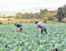 Los extensionistas de Agricultura atienden desde el Sistema de Extensión Rural, por medio de Centros de Aprendizaje para Desarrollo Rural.