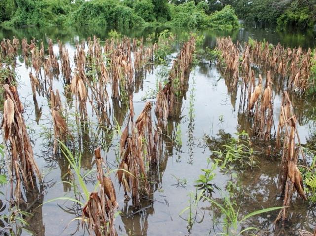 Invierno será más fuerte: Cómo se deben preparar los productores para las lluvias que vienen