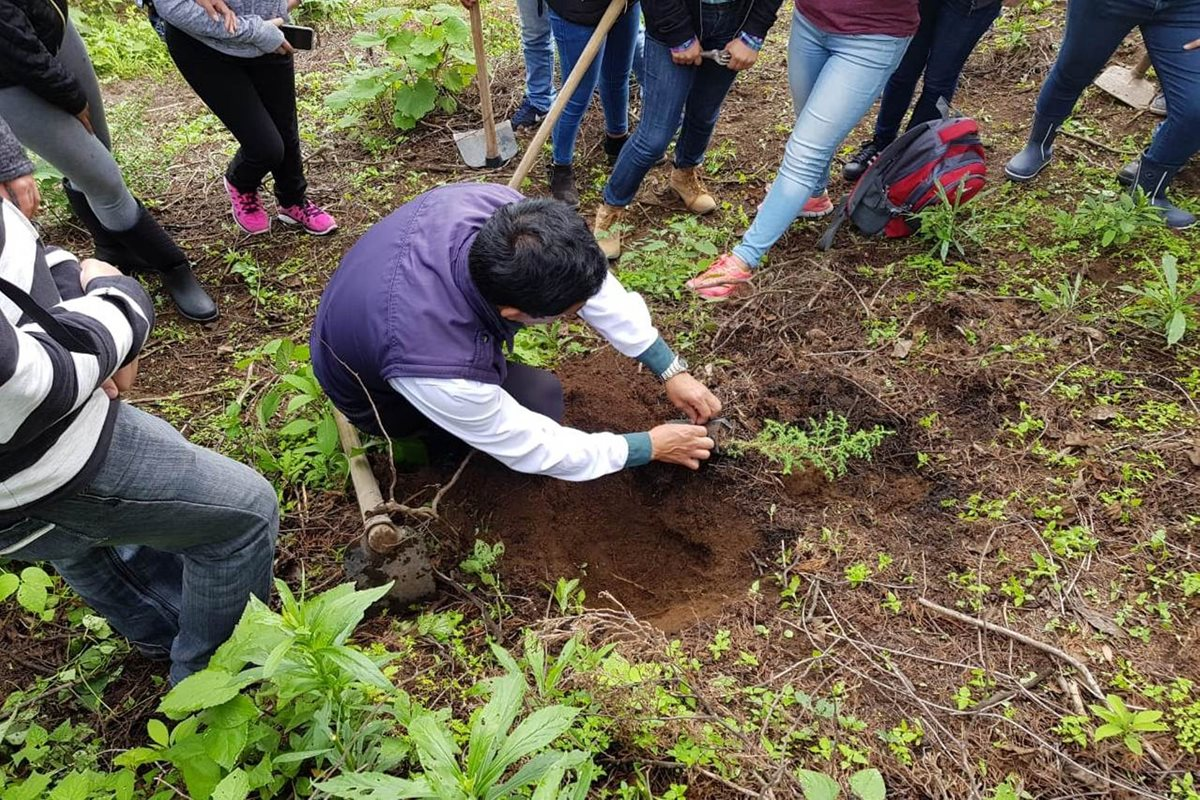 El 95 por ciento de árboles se muere si no reciben cuidados, en Quetzaltenango se han plantado 20 mil este año