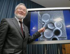 Ohsumi es reconocido por sus experimentos innovadores, realizados en los 90, sobre la autofagia, el proceso por el cual una célula se degrada y recicla parte de su contenido, lo que genera rápidamente combustible y componentes básicos.(Foto Prensa Libre: AFP)