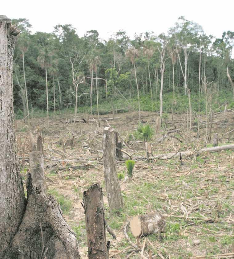 Ruta Carmelita: varios terrenos que pertenecen a la Reserva de la Biosfera Maya han sido presupuntamente invadidos o ilegalmente vendidos (Foto Prensa Libre: Hemeroteca PL).