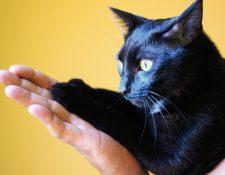 El Día Internacional del Animal sin Hogar se celebra con el propósito de crear conciencia en el cuidado, rescate y rehabilitación de animales de la calle. (Foto Prensa Libre: Brenda Martínez).