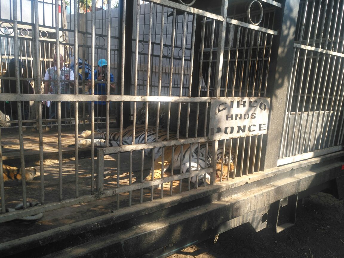 Debido a la prohibición de espectáculos con animales, propietarios del circo los dejaron temporalmente en un terreno. (Foto Prensa Libre: Cortesía Conap)