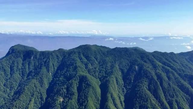Conap denuncia tala ilegal en Sierra de las Minas