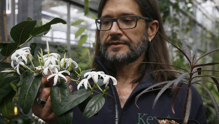 El 21% de las plantas del mundo están en peligro de extinción, según el primer censo mundial. (Foto Prensa Libre: AP).