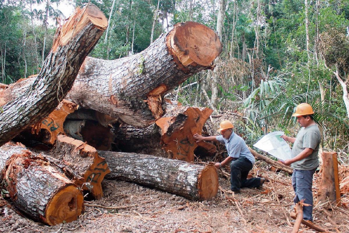 Concesiones forestales favorecen al   bosque