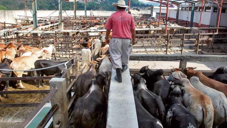 Varios casos de rabia se registraron en Petén, donde las autoridades del Maga llegaron a tomar muestras.