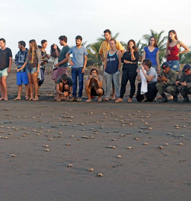 El próximo domingo, turistas podrán liberar tortugas marinas en las playas de Las Lisas, Chiquimulilla, Santa Rosa. (Foto Prensa Libre: Cortesía Marvin Grijalva)
