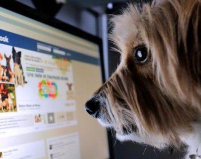 """La red social crea distintos """"perfiles"""" y te muestra contenido específico según el grupo al que perteneces. GETTY IMAGES"""