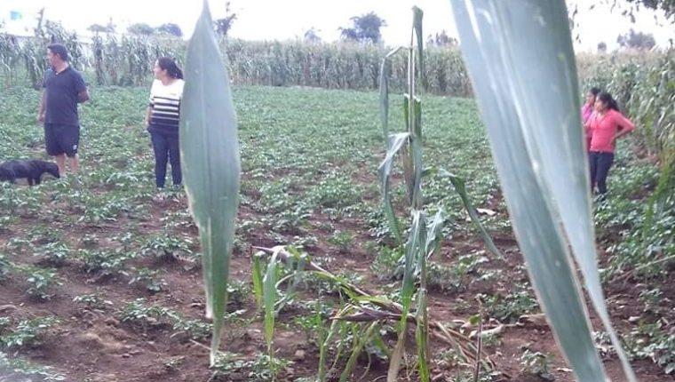Este es el lugar donde encontraron a los perros muertos en la zona 3 de La Esperanza. (Foto: Cortesía)
